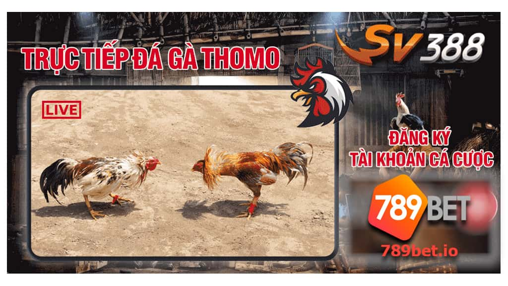 đá gà trực tuyến 789bet - sảnh sv388