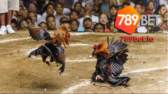 Trường đấu gà trực tuyến sv388